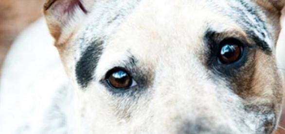 Irresistible mirada de un perro callejero
