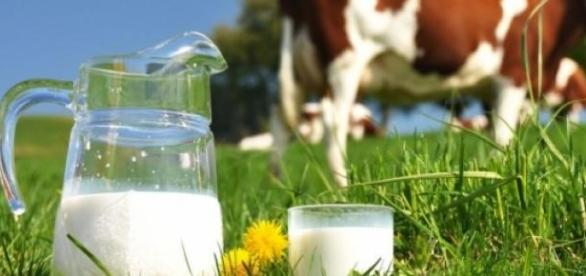 lapte, autohton, romanesc, european