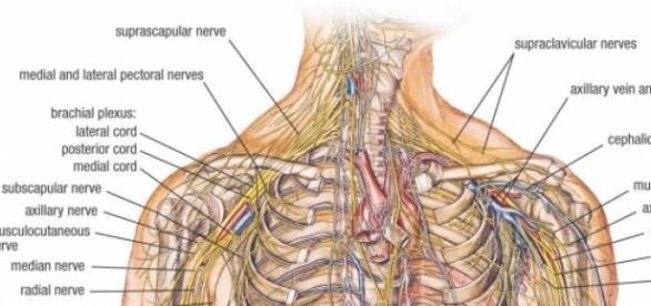 Curiozitati despre corpul uman