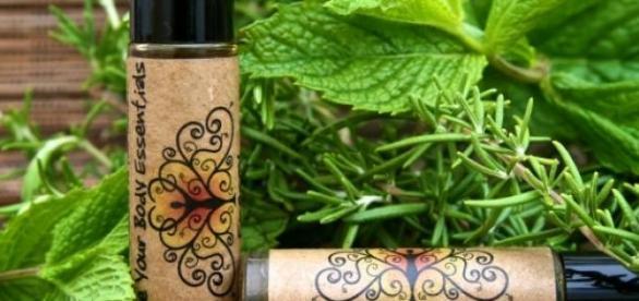 rozmarin, uleiuri, plante