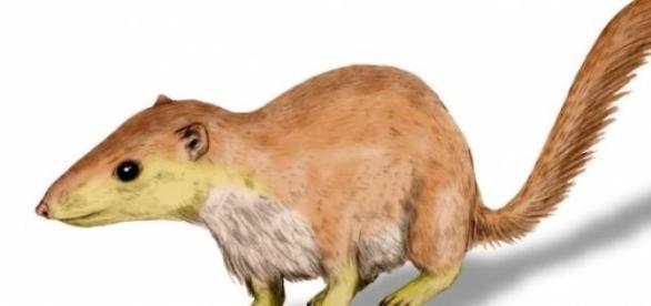 Purgatorius, ancestro de los primates