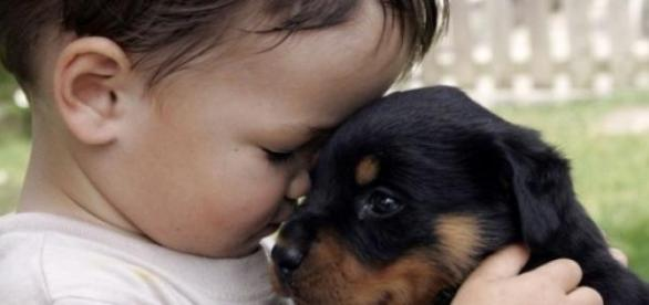 Animal de companie in loc de copil?