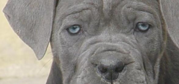Siguranta sporita=Rasa canina potrivita