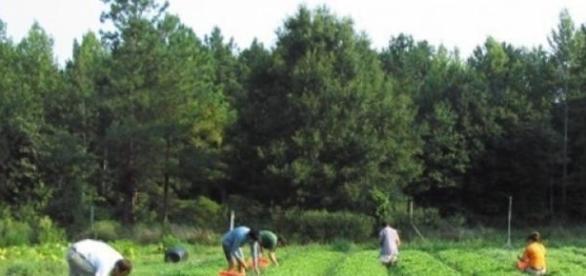 subventii, agricultura, ecologica