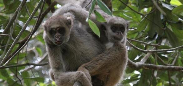 Como ser um voluntário do Zoológico de São Paulo