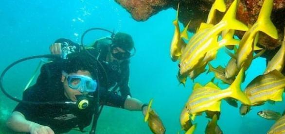 Mergulho em Fernando de Noronha faz sucesso