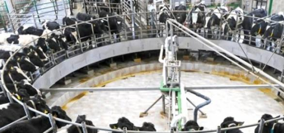 Descida no preço do leite pago ao produtor