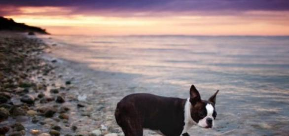 cão na praia em um dia luminoso de sol