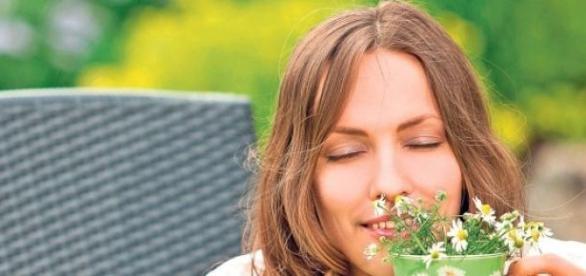plante ca principală sursă de îngrijire medicală