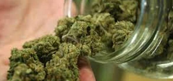 Cannabis, al via alla Camera la proposta di legge