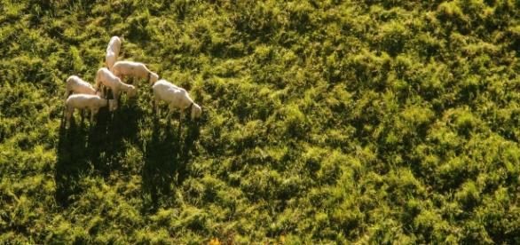 Imagem aérea de feita por um drone