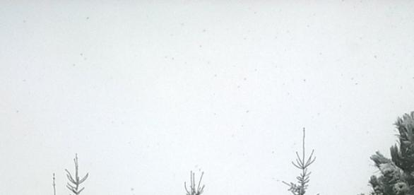 Pierwszy śnieg pod Krakowem - fot. J. Grecka