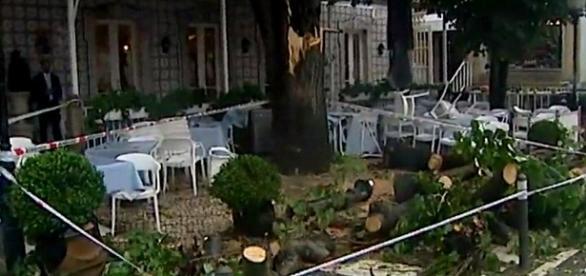 Queda de árvore feriu duas pessoas em Sintra