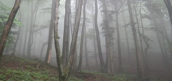 Victimele au fost găsite într-o pădure