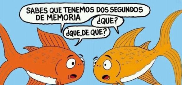 Broma sobre la supuesta poca memoria de los peces