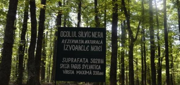 Pădurea virgină de fag Izvoarele Nerei