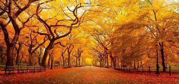 Disfruta del ambiente magico del otoño por Europa