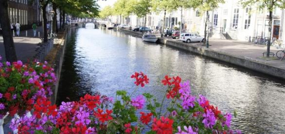 50 Bolsas de estudo para brasileiros na Holanda