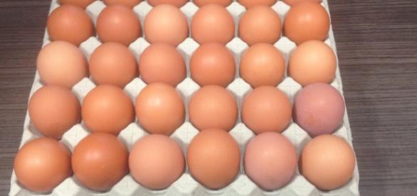 Bandeja llena de huevos Alardone