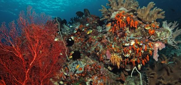 Healthy coral is full of life and very colorful