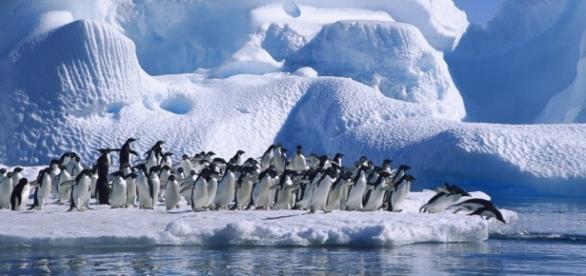 Pingüinos en el hielo de la Antártida