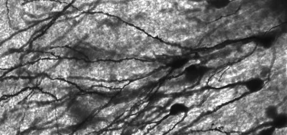 Ejercicios para mantener las neuronas en forma