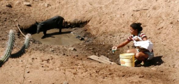 Ceará possui açudes sem água. População sofre.