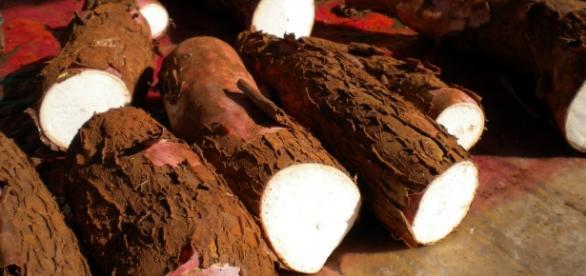 A macaxeira e seus benefícios na nutrição