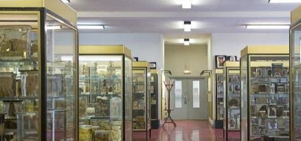 Museu Dupuytren visto de dentro