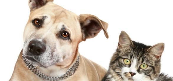 Campanha contra raiva em cães e gatos