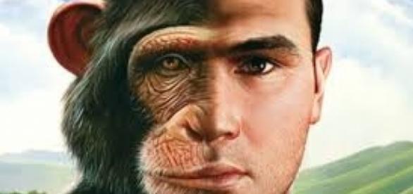 Evolutia omului!! de la maimută la omul modern