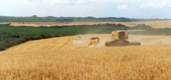 Multinacional americana compra terras irregulares