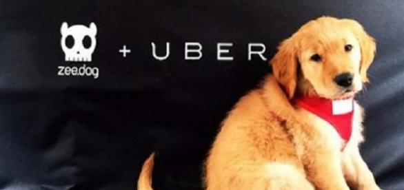 Passageiros agora podem passear com cães no Uber