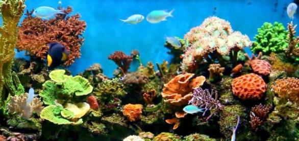 Corales ante el peligro de los protectores solares