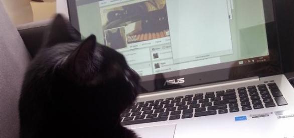 Zwierzęta domowe podbijają internet.