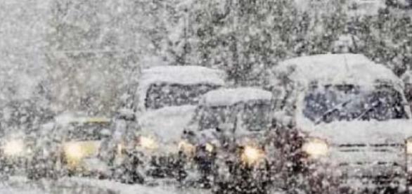 COD GALBEN de ninsoare în România