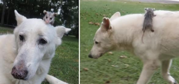 Era uma vez a amizade de uma cachorra com um gambá