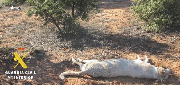 Imagen de los dos perros maltratados en Burgos