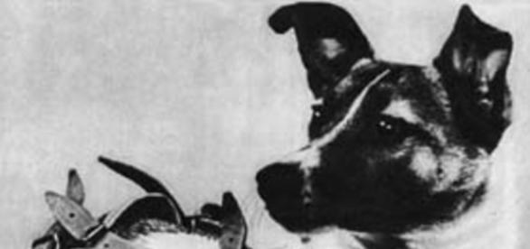 Łajka - pierwsza żywa istota w kosmosie