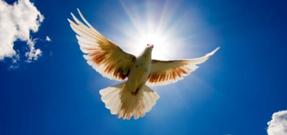 A pomba, um símbolo mundial de paz