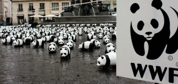 L'ottimismo delle ong WWF e OXFAM