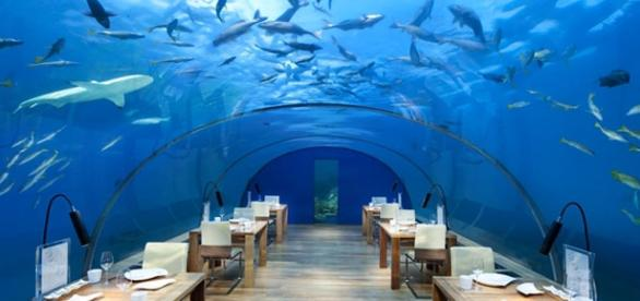 Ithaa underwater restaurant in the Maldives