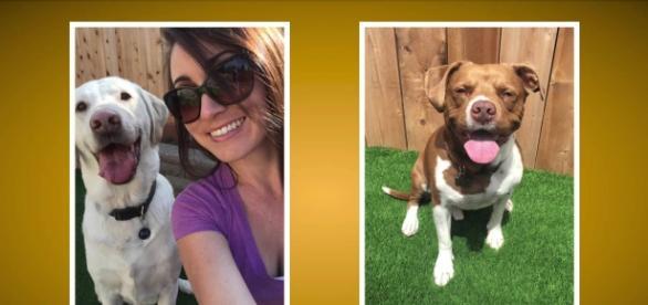 Pooch Selfie, haz la mejor foto de tu perro
