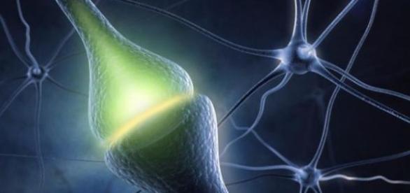 El procedimiento de la sinapsis.