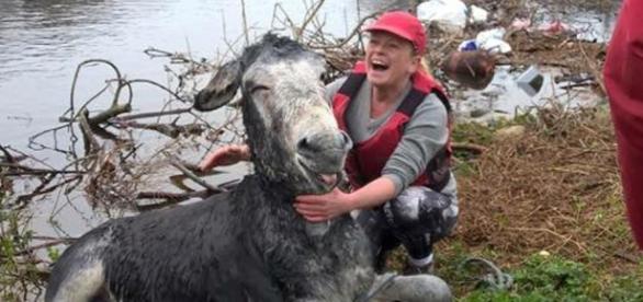 Suzanne Gibbons e o burro sorrindo ao ser salvo