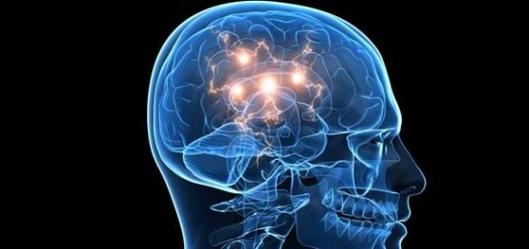 La simulación de la red cerebral