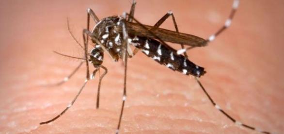 Suspeita do zika em Minas Gerais