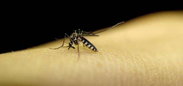 O vírus zika poderá estar associado à microcefalia