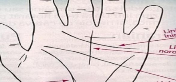 Cele mai importante linii ale palmei.