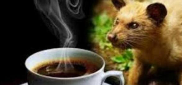 Felino faz o mais caro café do mundo